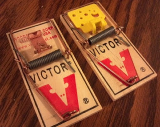 "At left, the model M-040 mousetrap, designed in 1899 and a bestseller ever since; at right, the Pro or ""Easy Set"" M-325, with its ""cheeselike"" trigger plate. The blood-red ""V"" graphic enclosing a mouse appears on traps manufactured after 1955."