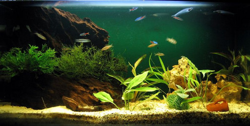 Aquariums make an excellent and beautiful feng shui addition to any home.