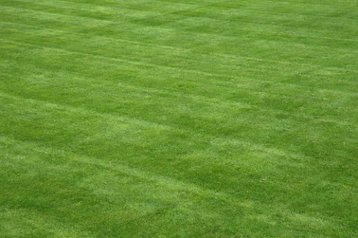 What could be more boring than a perfect lawn?
