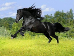 Black Beauty.    A wonderful British horse (only in the book)
