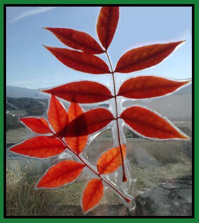 Laminated Leaf