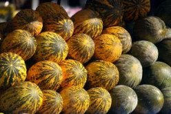 Christmas Treats and Review: The Santa Claus Melon and How To Find and Enjoy It