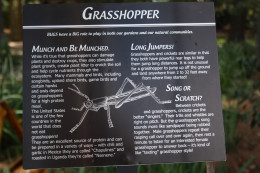 All about the grasshopper.
