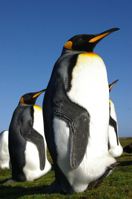 Google Penguin was initiated on April 24, 2012.