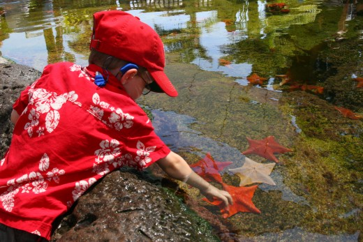 The tide pool exhibit allows children to touch sea stars and other ocean invertebrates.