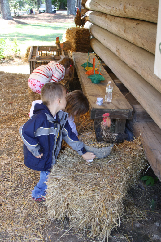 Looking for hidden eggs from the chickens.