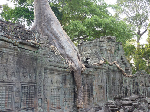 Growth takes place in the midst of hardships and challenges. At Preah Khan Temple, a Tree growing over Buildings. Photo taken March 3, 2010.