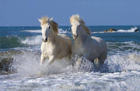 Freedom..........