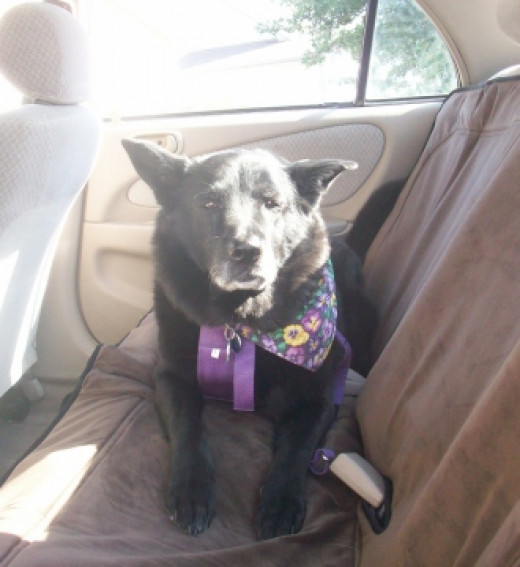 My dog Sephi was older with a bit of arthritis and so we used a heated car seat cover for long road trips.