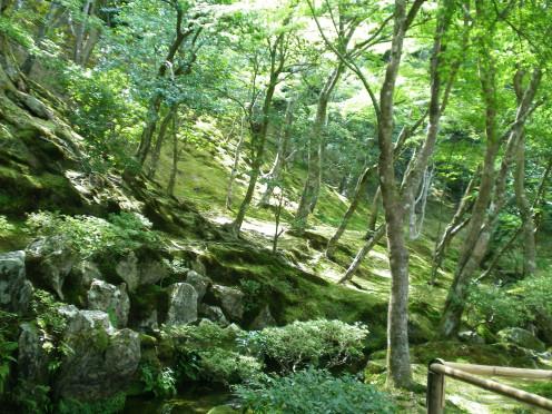 Peace in the hills above Arashiyama (c) A Harrison