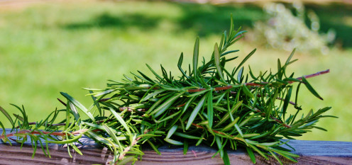 Before moving them indoors, prune woody herbs by up to 1/3. Pictured: rosemary clippings.