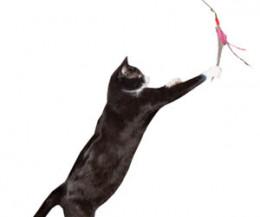 Da Bird Cat Toy - Easy Store - 2 Part Pole
