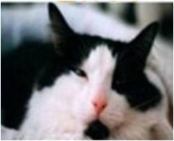 Cat Saved by Blood Donor Cat - Now Blood Brothers and Friends for Life