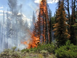 Fire in Yellowstone National Park. Some forest fires can be put out by firefighters. Others cannot. Can we find the serenity to accept this?
