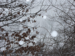 Then the snow started and the wind howled....