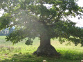 How to Tell a Tree's Age