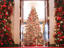 Complete Tips for Setting Up Your Christmas Tree