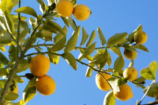 Lemon Juice is a Cheap and Natural Skin Care Product.
