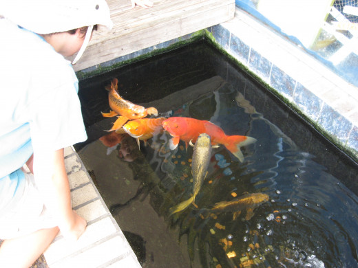 Fish can help with Mosquito Control.