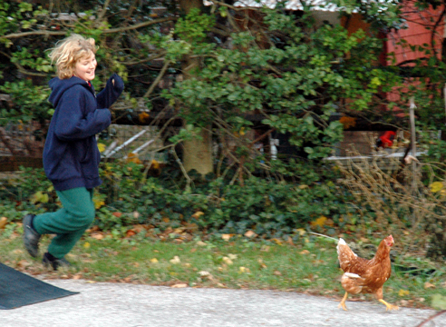 CHASING CHICKENS IS FUN