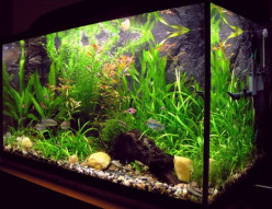 A Beginners Guide to Freshwater Aquariums