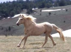 Please Help Save America's Wild Horses and Domestic Horses