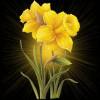 Nikitha Roy profile image
