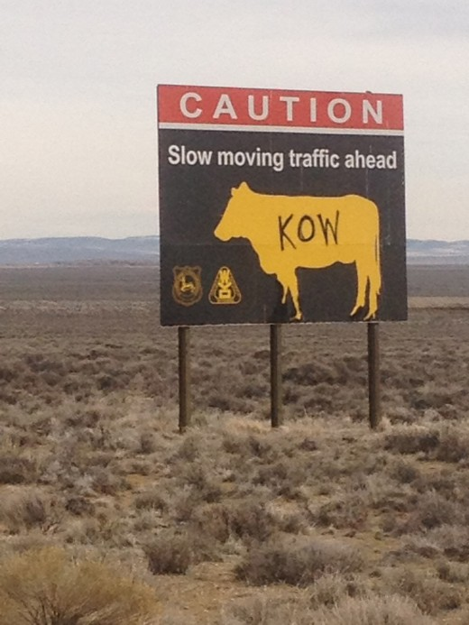There is slow moving traffic in Wyoming. More cows than cars!