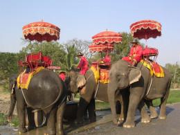 Ayutthaya Elephant Camp in Thailand