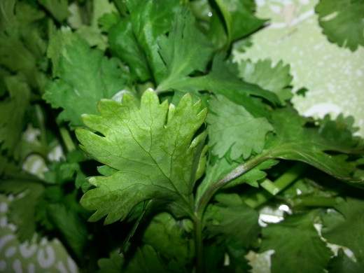 Image5: Coriander Leaves