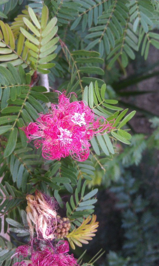 An exotic tree flower found at Rio Perdido.