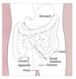 Colon Health is Important
