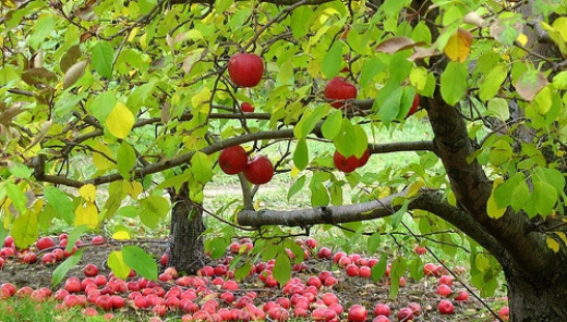 Wherefore by their fruits ye shall know them. -Matthew 7:20