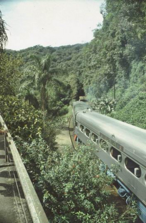 A train in a tropical rainforest.