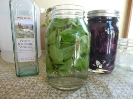 Combine a variety of basils for a richer flavor. Pictured here, white wine vinegar, Profuma di Genova and Salad Leaf basil and the jar on the right: white wine vinegar with red Rubin and purple opal basil.