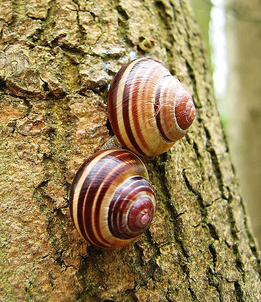Snails in your garden!