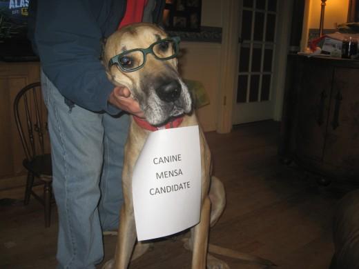 Smartest Dog