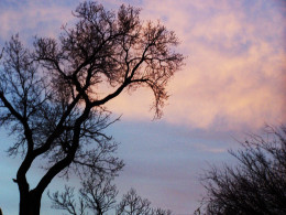 the trees rejoice