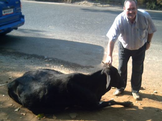 My husband with a cow lying in the road, in India.......... as they do........