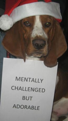 Smartest Dog Breeds - and the dumbest