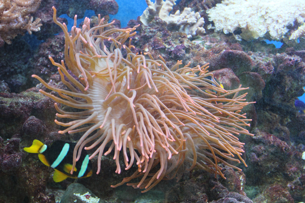 How to choose compatible fish for your first marine reef for Freshwater fish compatibility
