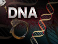 How do Forensic DNA Databases Help Law Enforcement?