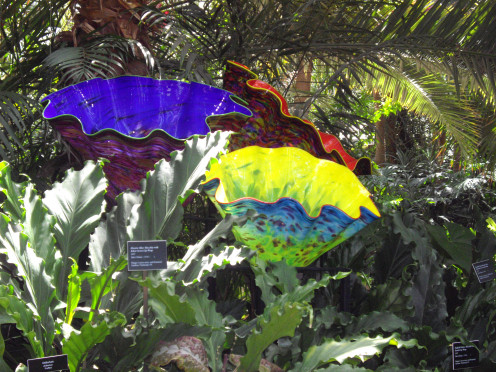 Dale Chihuly sculptures in the Palm Court of Phipps Conservatory.