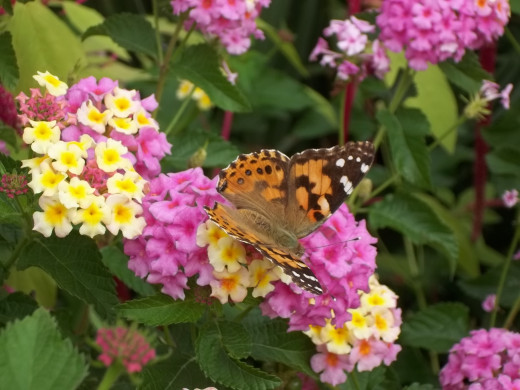 A butterfly on a flower at the annual butterfly exhibit