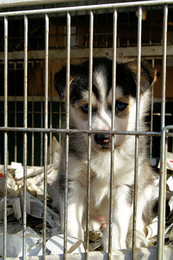 Buy Puppies Online If You Want To Support A Puppy Mill