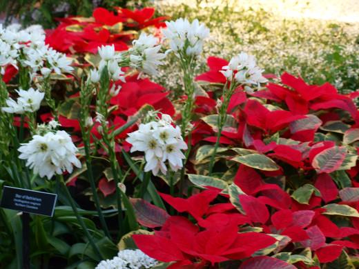 Holiday floral display