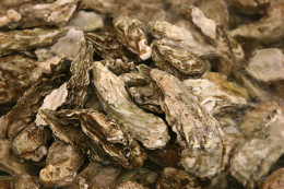 Oysters have the highest amount of zinc per gram than any other food! Some types of oysters contain 1200% of your zinc daily needs!