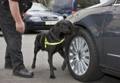 How the Cops Train Dogs to Find Drugs