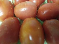 Spicy Tomato Pickle Recipe