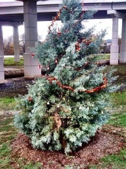 Last year's tree!